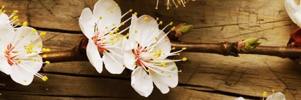 gỗ thơm deponline
