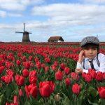 Mùa hoa tulip khoe sắc rực rỡ ở Hà Lan
