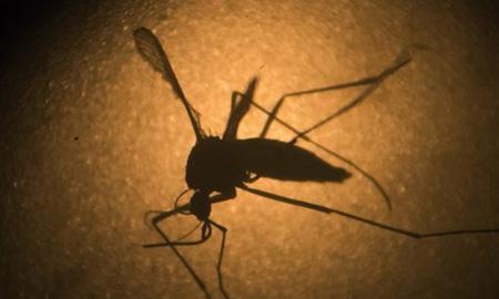 Brazil chế tạo thiết bị chẩn đoán bệnh sốt xuất huyết trong 15 phút