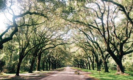 Savannah – thành phố bí ẩn dưới rừng sồi