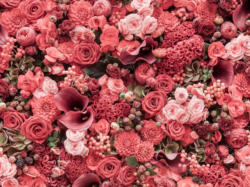 Ý nghĩa các loài hoa nên tặng mẹ nhân Ngày của Mẹ