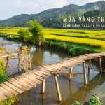 Mùa vàng tháng 6 cùng gánh thóc về Pù Luông