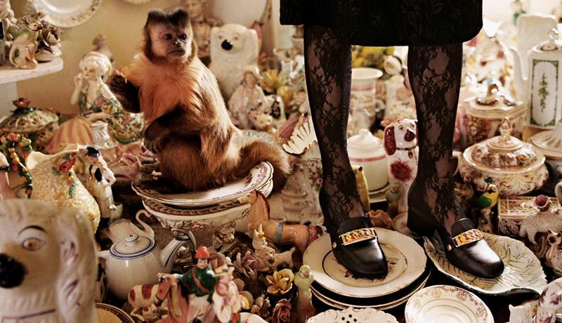 """Bộ hình còn có sự tham gia của những """"người mẫu"""" đặc biệt như chú khỉ trong hình trên."""