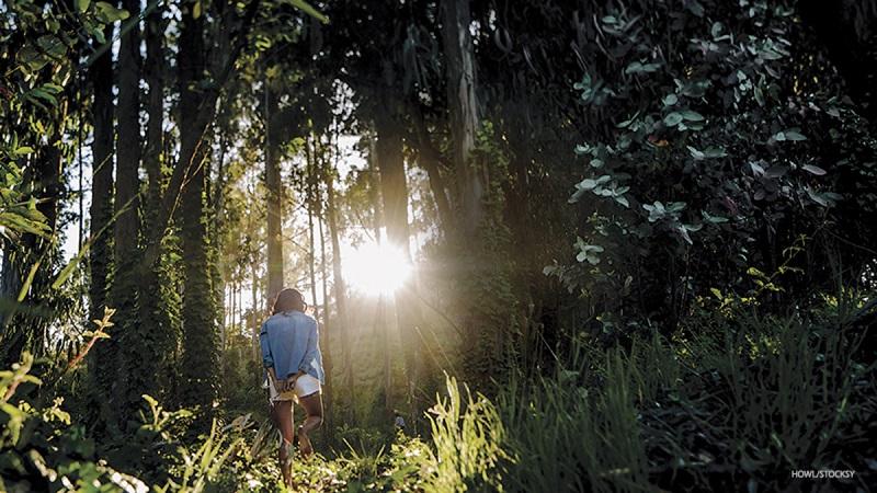 """""""Tắm rừng"""" chính là việc hòa mình vào thiên nhiên, môi trường xung quanh."""