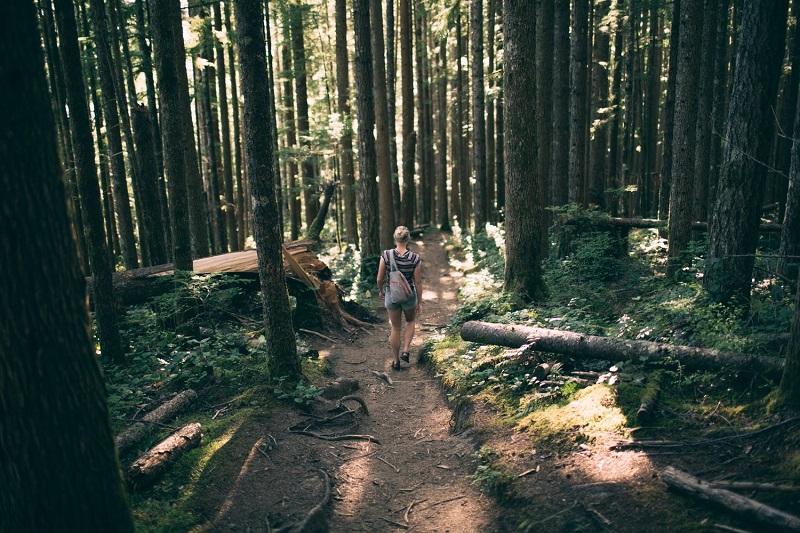 """Một trong những lợi ích của việc """"tắm rừng"""" là tăng hệ hệ thống miễn dịch."""