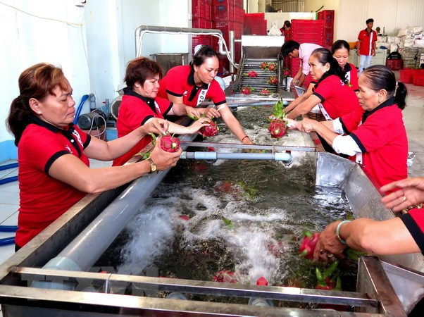 Trung Quốc chiếm 74% thị phần xuất khẩu rau quả Việt Nam