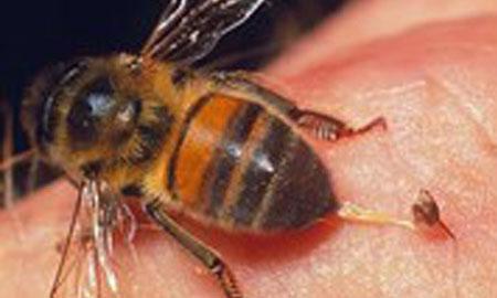 Đồng Nai: Một phụ nữ tử vong do bị ong vò vẽ đốt khắp người