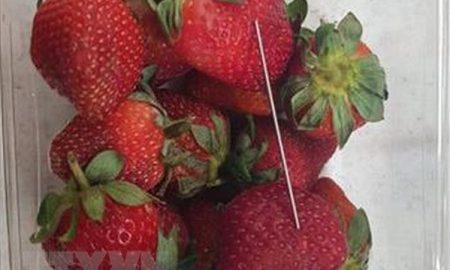 """Chuyện lạ có thật ở Australia: Những trái dâu có """"hột"""" là kim khâu"""