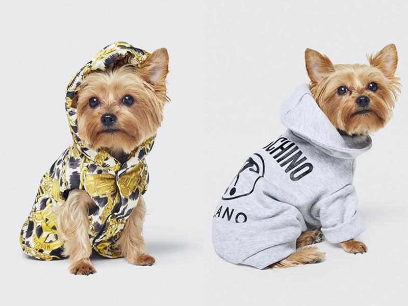 """Ngoài ra, một trong những điều khiến tất cả phải thán phục độ """"điên có đẳng cấp"""" của Jeremy Scott chính là những mẫu hoodies dành cho cún theo đúng họa tiết, tông màu chủ đạo của BST lần này."""