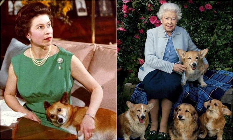 """Những chú chó Corgi – """"Tri kỉ"""" 80 năm của Nữ hoàng Elizabeth"""