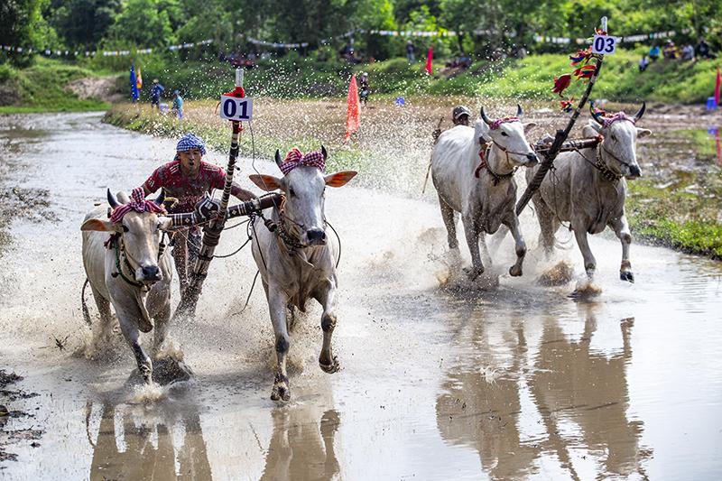 Độc đáo lễ hội đua bò chùa Rô