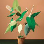 Eat Green: Nhật ký mỗi ngày của những người sống xanh