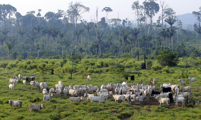 Nạn chặt phá rừng để lấy đất canh tác và nuôi trồng sẽ dẫn đến nạn tuyệt chủng hàng loạt của động vật.