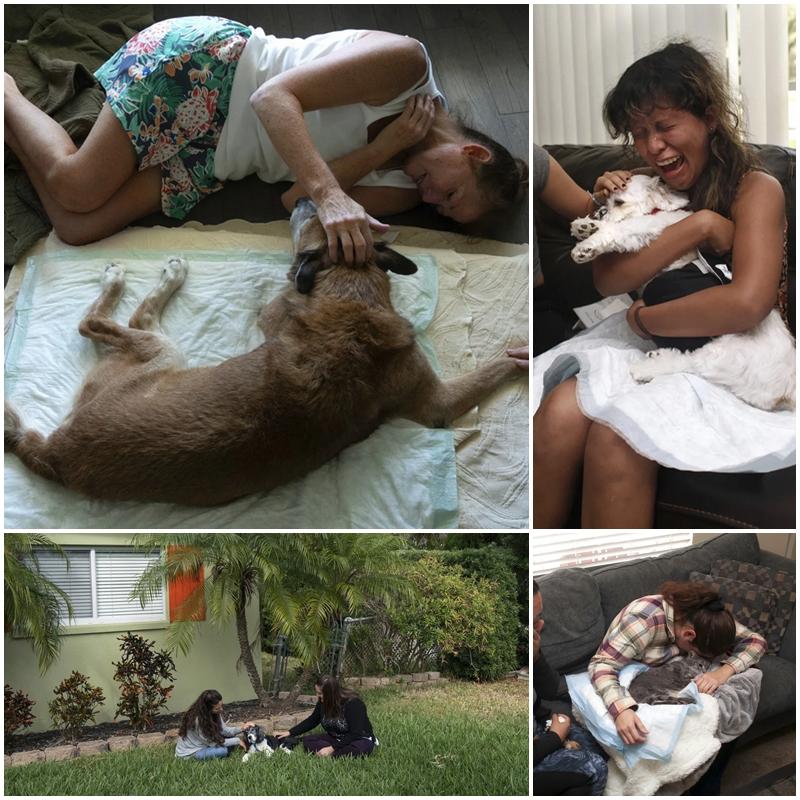 Bộ ảnh đầy xúc động ghi lại khoảnh khắc cuối cùng của thú cưng và người chủ