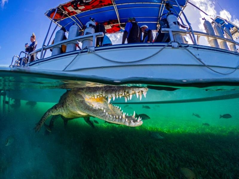 """Một """"biên giới"""" độc đáo được thể hiện ra trong tấm hình: người trên mặt nước và cá sấu dưới lòng nước. Trong ảnh là con cá sấu đang mở to miệng, đuôi duỗi thẳng, đường hoàng khoan khoái thư giãn bên dưới đáy tàu. Đây hẳn là một trải nghiệm khó quên với nhiếp ảnh gia bởi những giây phút hồi hộp và kinh hoàng nó mang lại."""
