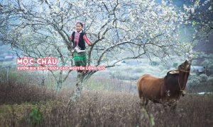 Mộc Châu: Vườn địa đàng giữa cao nguyên lộng gió