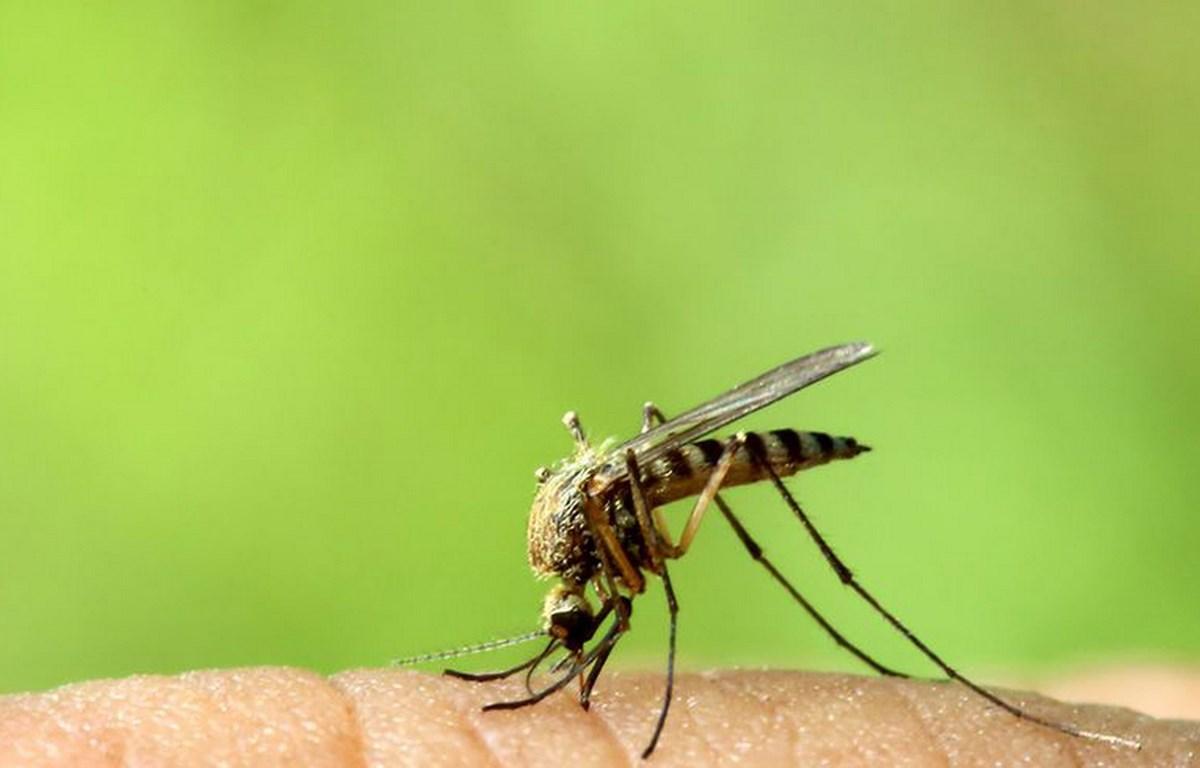 mosquitom1488909056