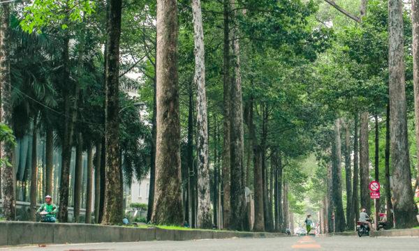 Sài Gòn và những con phố xanh hoài niệm
