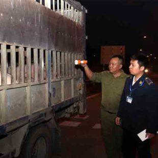 Kiểm soát chặt dịch tả lợn châu Phi, không để lây lan vào phía Nam