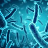 Phương pháp mới phát hiện vi khuẩn chỉ trong vài phút