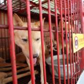 Chính thức đóng cửa khu chợ thịt chó lớn nhất Hàn Quốc