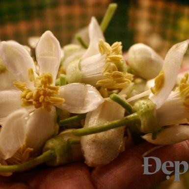 Nước hoa bưởi – hương vị tuyệt vời cho chiếc bánh Trung thu thơm ngất ngây