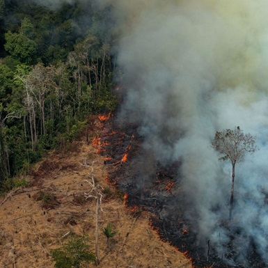 Đừng lo khi không thể trực tiếp chữa cháy rừng Amazon, đây là những điều thiết thực bạn có thể làm được!