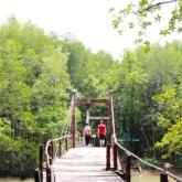 Rừng sác Cần Giờ – chốn xanh yên bình của Sài Gòn
