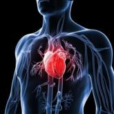 Điều trị sớm cholesterol cao giúp ngăn chặn nguy cơ bệnh tim, đột quỵ