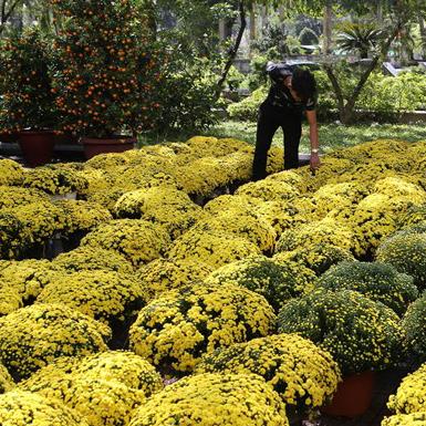 Hình ảnh chợ hoa xứ Huế rực rỡ sắc màu những ngày giáp Tết