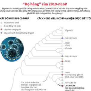 """[Infographics] Tìm hiểu những """"họ hàng"""" của virus chủng 2019-nCoV"""