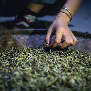 Hương Tà Xùa trong chén trà của Tân