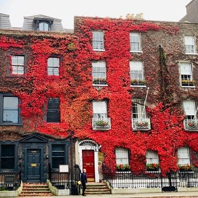 Thu cuối dịu dàng Dublin những ngày giãn cách
