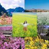 Sở hữu những bức ảnh nghìn likes tại 5 điểm săn hoa đẹp nhất Việt Nam