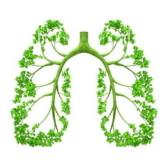 6 thói quen tốt cho phổi mà bạn nên biết