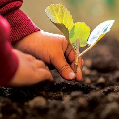 Những hành động nhỏ này có thể giúp bạn bảo vệ môi trường ngay từ ngày hôm nay