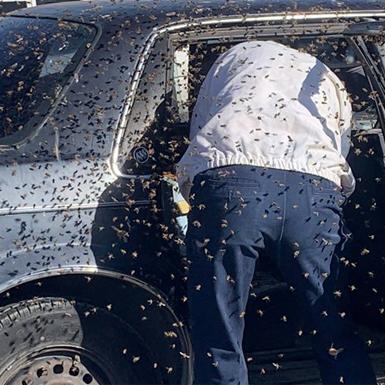 """Vào siêu thị 10 phút, người đàn ông bị 15.000 con ong """"chiếm"""" xe ôtô"""