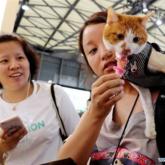 Người dân Trung Quốc 'đốt' hơn 20 tỷ USD mỗi năm cho dịch vụ thú cưng